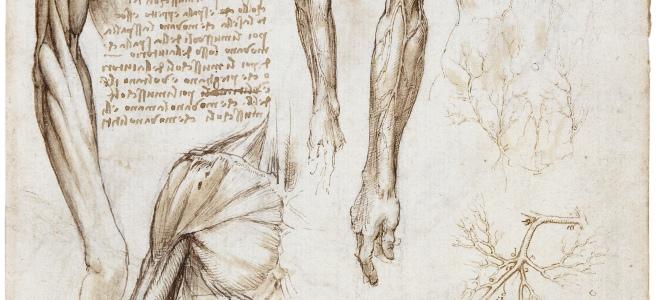 """A Dead or Moribund Man in Bust Length"" was created by Leonardo Da Vinci between 1510 and 1511."